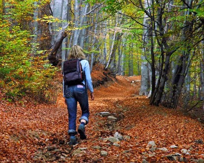 image of women hiking in the woods